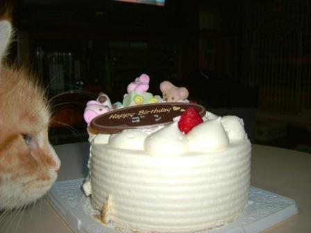 茶々とケーキ