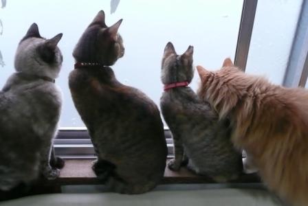 窓辺の四姉妹