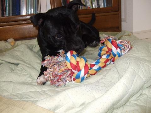 ロープで遊ぶアルゴ
