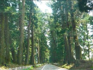 09-04-12 杉