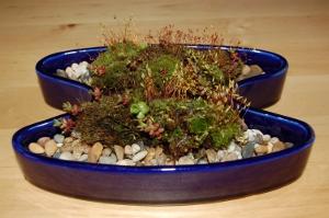 moss and sedum