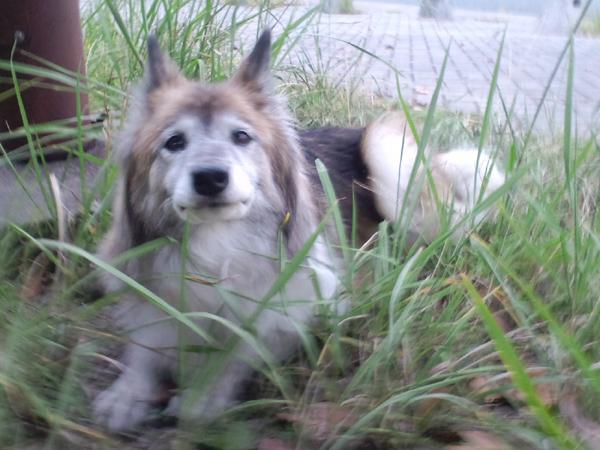 090911保護犬
