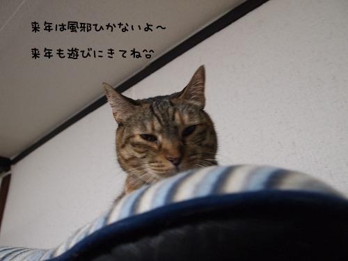 PC301194.jpg