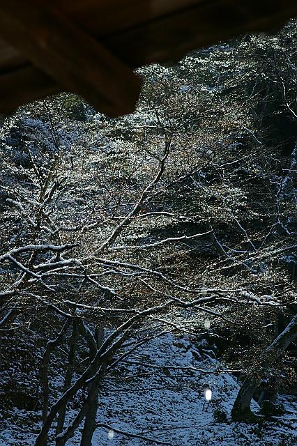 雪解けの しずくを照らす 日の光