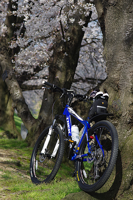 自転車が便利