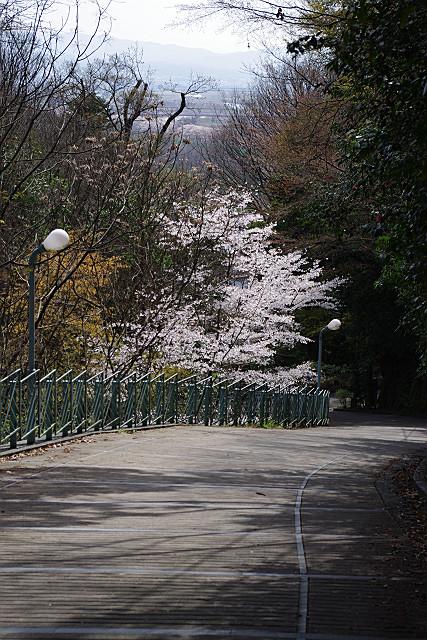 山荘への裏道