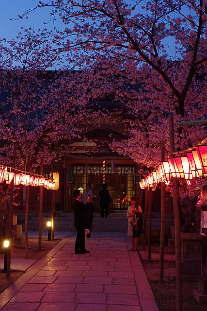 夜桜と記念撮影