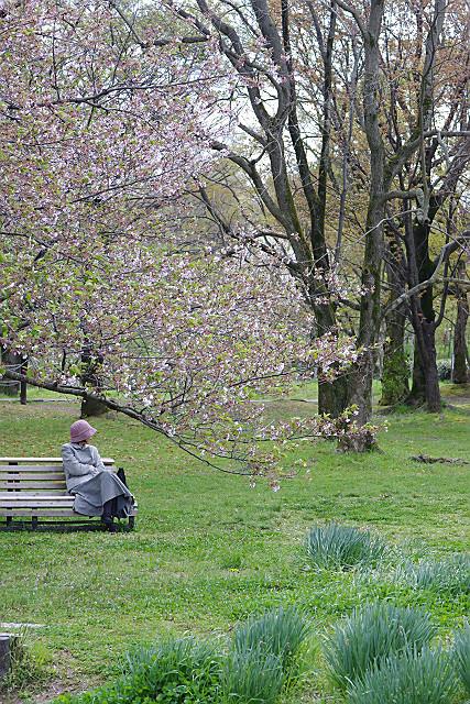 葉桜の下で