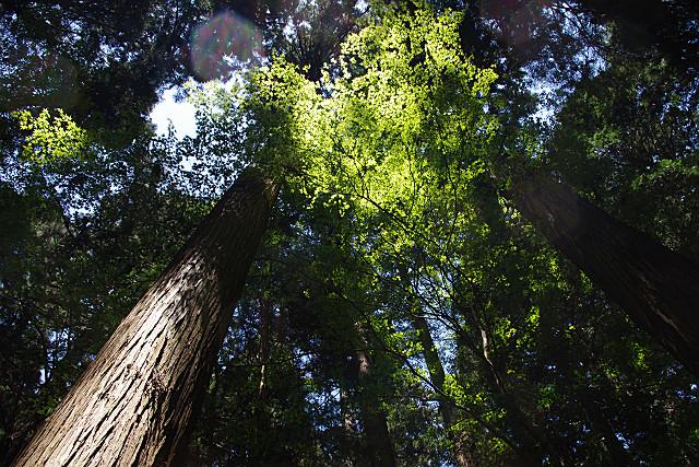 木立から太陽を見上げて