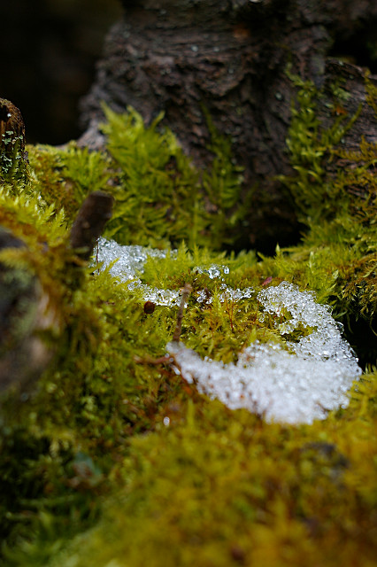 三日月の 形で眠る 苔の上