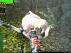 森の珍獣、コンガを狩れ!