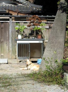 厠前の犬・・・:観音正寺