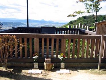 茶畑:観音正寺