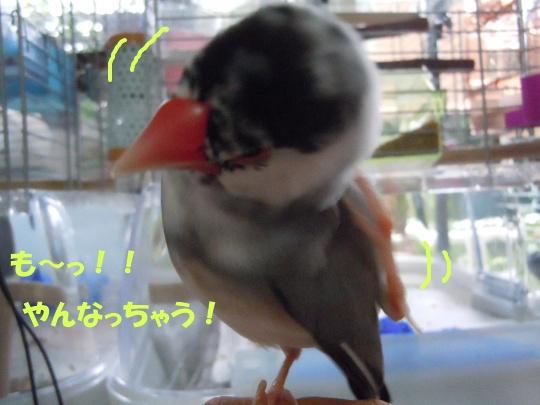 DSCN0627_20110923191936.jpg