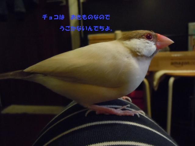 DSCN3186.jpg