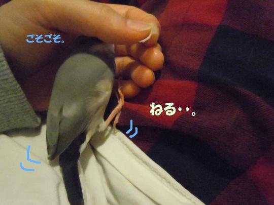 DSCN3483_20110617233046.jpg
