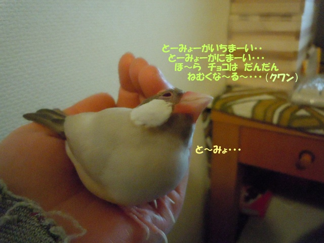 DSCN5239.jpg