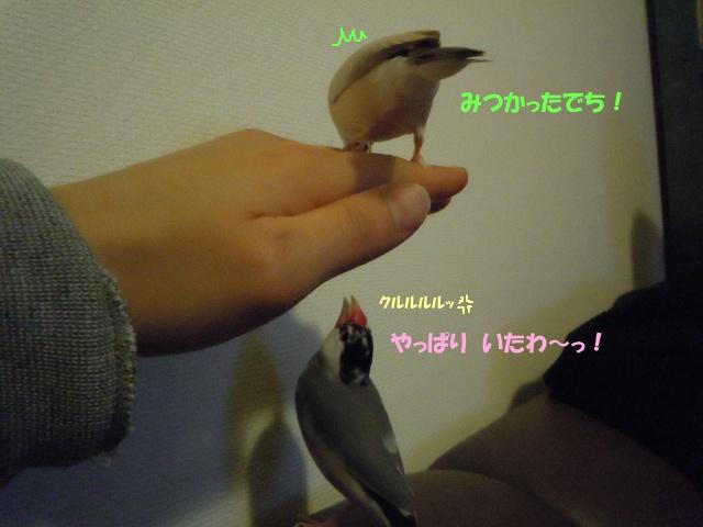 DSCN7273.jpg