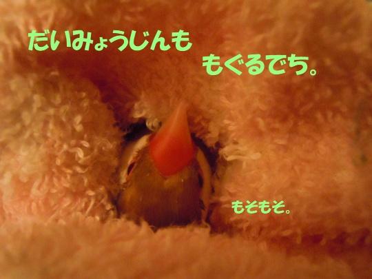 DSCN7764_20120215225938.jpg