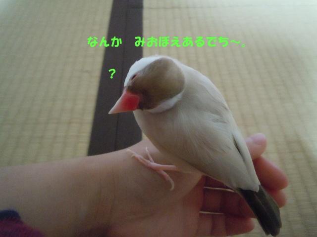 DSCN9068.jpg