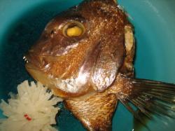 りりしい顔です。鯛の兜焼き(*^_^*)