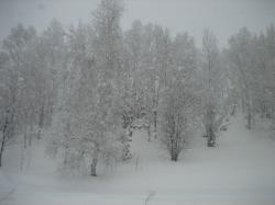 昨日は午後から吹雪き模様だった旭川