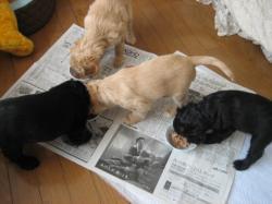 4匹の子犬たち ▽・w・▽