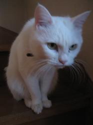 白猫のちょびです(=^_^=)