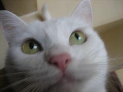 ピンクの鼻です