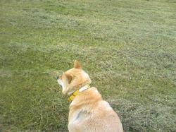 きれいに草が刈られた堤防で・・・