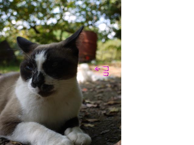 snap_chiromix4shamcat_2009100134929.jpg