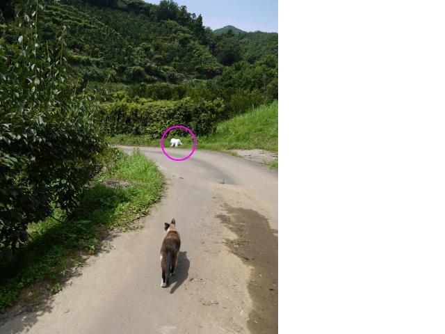 snap_chiromix4shamcat_200984143358.jpg