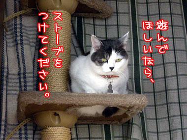 2008-11-23-3.jpg