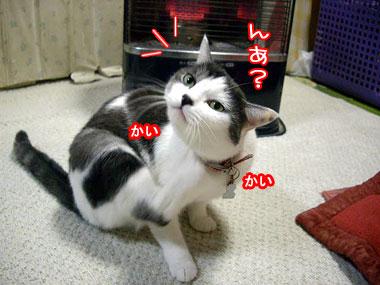 2009-1-4-1.jpg