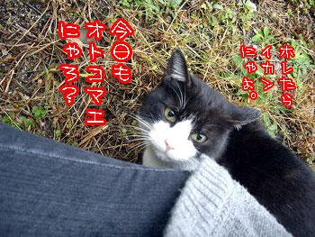 2009-11-26-2_20091126130624.jpg