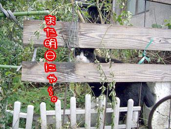 2009-11-26-3_20091126130632.jpg