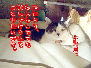 2009-11-30-4.jpg