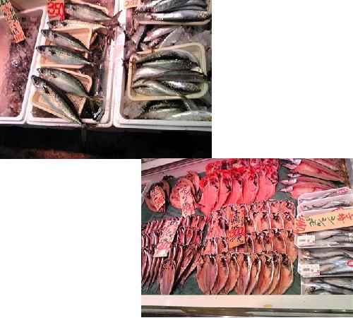 魚センターの魚