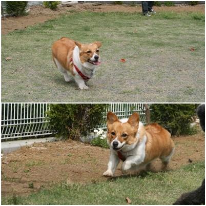 走るメロン