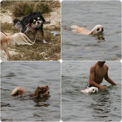 泳ぐみんな