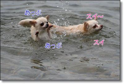 溺れるハクちんと泳ぐナナちゃん