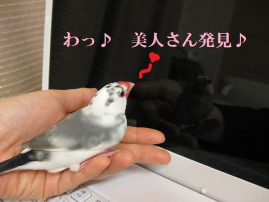 006_20110308232503.jpg