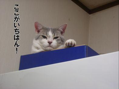 IMGP4292.jpg