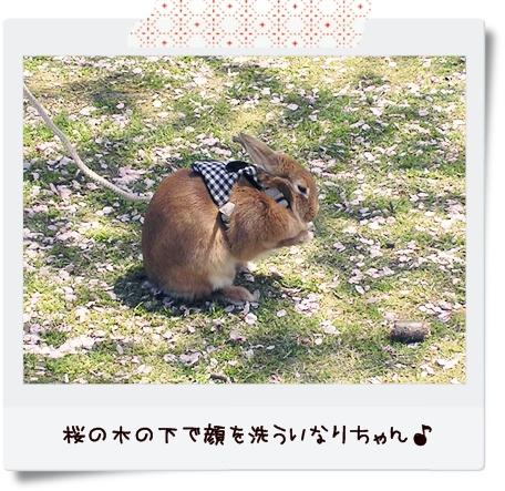 いなりと散歩3