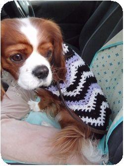 P1020164セーター