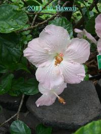hawaii11_convert_20120102220552.jpg