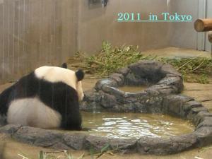 tokyo1_convert_20111229231942.jpg