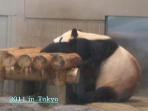 tokyo_convert_20111229232128.jpg