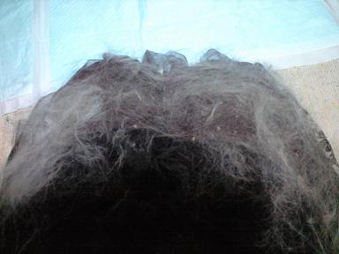 毛だらけ~~