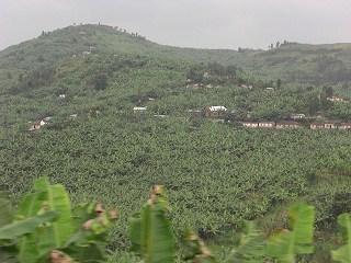 rwanda (39)